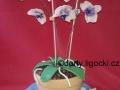 stul_orchidee